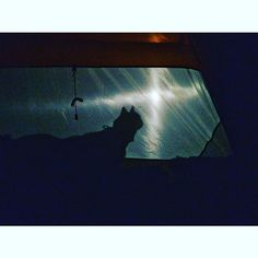 May the force be with you, as it is with Taku. ✌🏽️#campingwithkitties #campingwithcats #shadowboxing #adventurescats #intents