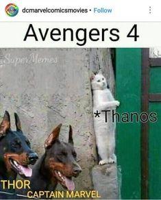 25 Hilarious Avengers Endgame Memes to Bring you Back to Life - Gag Loop Marvel Avengers, Marvel Jokes, Marvel Dc Comics, Avengers Cast, Funny Marvel Memes, Dc Memes, Marvel Heroes, Funny Memes, Nerd Memes