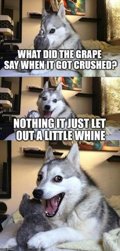 So punny. - Jokes - Funny memes - - So punny. I love memes with this dog! This dog is my spirit animal The post So punny. appeared first on Gag Dad. Funny Shit, Funny Puns, Funny Quotes, Funny Stuff, Hilarious Jokes, Funniest Memes, Funny Laugh, Top Funny, Greatest Memes