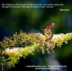 The Beauty of the Butterfly
