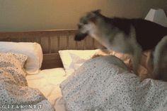 Als je bent opgegroeid met honden of de film Hachi: A Dog's Tale hebt gezien (huilen,…