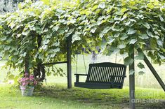 Grape Arbor With Bench Swing...