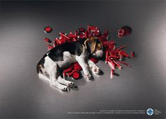 Help us cure the victims of cosmetic tests Society for the Protection of Animals (ENPA) Advertising Agency: Lowe Pirella Fronzoni, Milan, Italy Art Director: Lorena Cascino
