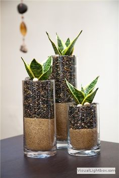 Plant: Sansevieria | Light: No sunlight needed | Care: Water every 6-8 weeks