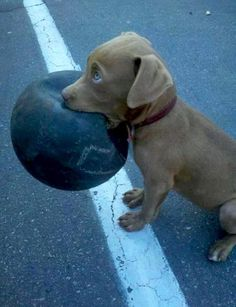 Does anybody want to play with me?  #cute dog #funny dog #dog #cute animals #puppy #puppies #pooch #poochie #doggie # doggy # doggies #dogs #funny dogs #funny puppies #funny puppy