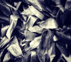 Night leaf