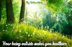 Did you know there are health benefits of nature? Clean air to natural exercise, Vitamin D and grounding, ecotherapy is healing in many ways. Wellness Mama, Health And Wellness, Health Benefits, Health Tips, Sainte Cecile, Herbs For Health, Guided Meditation, Natural Living, Love And Light