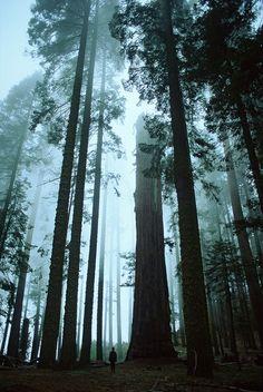 a walk among trees