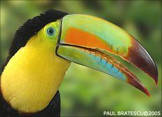 FAVORITE BIRD IN THE WORLD!