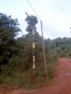 Guirlande de tongs perdues en Guyane