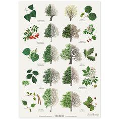 Træer Plakat