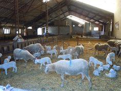 Une ferme à Bedous - Vallée d'Aspe, Pyrénées Atlantique