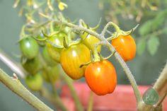tomates http://bittebcn.blogspot.com.es/