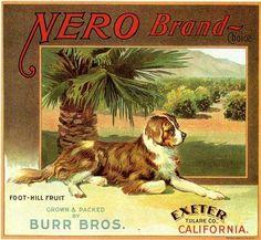 Exeter, Tulare County Nero Newfoundland Dog Orange Citrus Fruit Crate Label Advertising Art Print