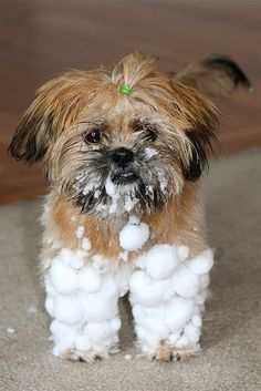 "SNOW PANTS ~~~ by freeplaylife, via Flickr ~~~ ""Frito loved running around in the snow, except when it was time to come inside.    The snow clumped around her fur until it looked like she was wearing tiny pants."""