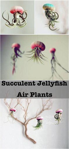 Succulent Jellyfish Air Plants