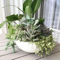 I couldn't be more happy with my succulent bowl. It's absolutely thriving lots of new growth. I might have to repot that Sedum burrito it& Succulent Bowls, Succulent Gardening, Succulent Arrangements, Succulent Terrarium, Succulents Garden, Garden Pots, Planting Flowers, Colorful Succulents, Hanging Succulents