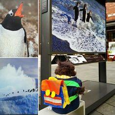 Fiete betrachtet seine Artgenossen. #Pinguine #Antarctica #Fotos #Ausstellung #HafenCity #Hamburg