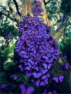 Woww so beautiful! Violet butterflies Woww so beautiful! Violet butterflies Woww so beautiful! Beautiful Bugs, Beautiful Butterflies, Amazing Nature, Beautiful World, Beautiful Places, Beautiful Pictures, Beautiful Creatures, Animals Beautiful, Photo Animaliere