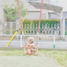 ただいま、オレお出かけ中。 しかし、普通の公園で乗せられる(๑¯̆ ᴈ¯̆๑)おれ。 🐶とかち ✭*.+゚iPhone7plus撮影 #きょうのとかちさん #トイプードル#とかち #わんこ #わんこ部 #お散歩 #ふわもこ部 #toypoodle #dog #dogs #犬 #愛犬 #愛犬部 #わんこなしでは生きていけません会 #わんこ大好き #instadog #dogstagram #cute  #写真好きな人と繋がりたい#写真撮ってる人と繋がりたい#inutokyo #ig_dogphoto #といぷー #といぷーどる #といぷーどる部 #いぬばか部 #お写ん歩