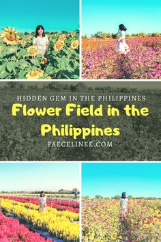 Flower Farm in the Philippines. Flower Field in the Philippines. Things to do in Philippines. Things to do in Tarlac. Day Trip From Manila. Siargao, Palawan, Asia Travel, Time Travel, Mexico Travel, Spain Travel, Wanderlust Travel, Coron, Cebu