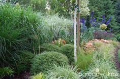 Ogród zmyślony - strona 210 - Forum ogrodnicze - Ogrodowisko