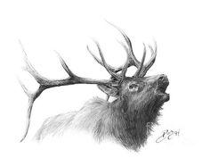 Elk..source for elk, deer and horn creatures