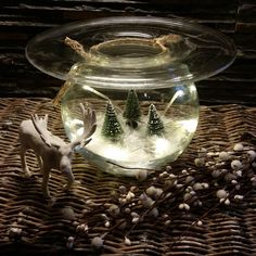 Diy Decoration, Terrarium, Snow Globes, Glass, Instagram Posts, Design, Home Decor, Photo Illustration, Diy Decorating