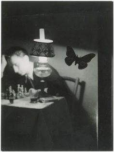 Amazing black and white insect photography. Insect Photography, Vintage Photography, Animal Photography, Modern Photography, Monochrome Photography, Film Photography, Brassai, French Photographers, Andre Kertesz