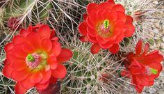 Take a southern Utah wildflower tour