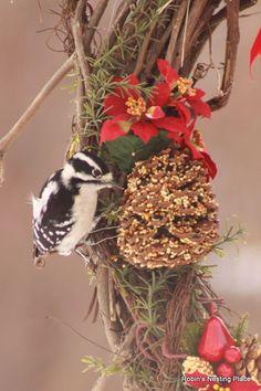 LOVE LOVE LOVE...this ROBINS NESTING PLACE: Winter Bird Food Wreaths