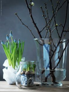 muscari of blauw druifje Interior Blogs, Interior Plants, Spring Flowering Bulbs, Spring Bulbs, Garden Power Tools, Deco Floral, Bulb Flowers, Danish Interior, Spring Flowers
