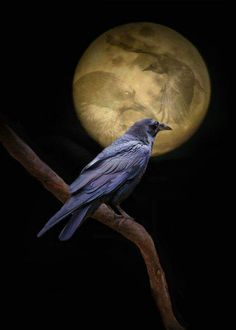 # CROWS MOON