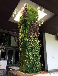 Utilize structural columns as the foundation for vertical gardens or as shown here, make a visual display with emphasis made on dramatic lighting.