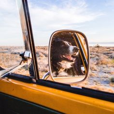 as free as untamed horses The Secret History, Car Mirror, Dark Night, Vw Bus, No One Loves Me, My Sunshine, Puppy Love, Life Is Good, Kittens