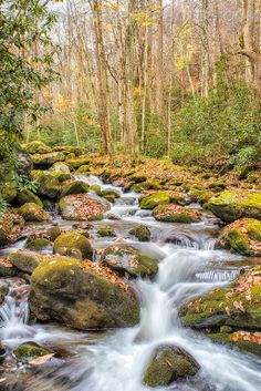 Another stream feeding the Middle Prong Little River in Smoky Mountain National Park near Tremont Tennessee.