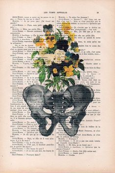 Impresión de anatomía pélvica de pensamiento botánico en 1900