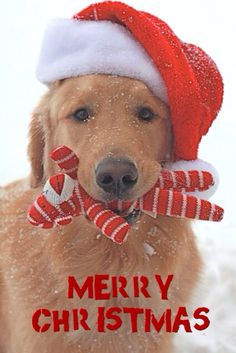 Merry Christmas To Angi and the By Invitation Group!