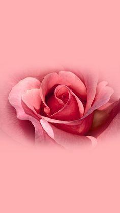 Power Wallpaper, Iphone Wallpaper Video, Cellphone Wallpaper, Pink Wallpaper, Aesthetic Iphone Wallpaper, Galaxy Wallpaper, Beautiful Flowers Wallpapers, Beautiful Roses, Cute Wallpapers