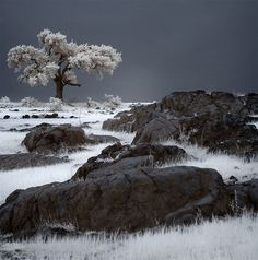 beautiful infrared photography 01 #InfraredPhotography #Infrared #Photography