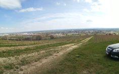 Hier entsteht ein neuer Weingarten, Guntramsdorf, Niederösterreich Country Roads