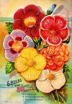 G-Bulbs-for-50-Cents-Vintage-Flowers-Seed-Packet-Catalogue-Advertisement-Poster