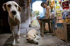 Nordindien im besten Licht. Warum Rajasthan auf deiner Reiseliste an erster Stelle stehen sollte.  #diefotofuechse schreiben über Motive die dich in Rajasthan erwarten  #india #rajasthan #pushkar  Infos im Web: Link in unserer Bio  #blog #fotoblog #photoblog #austrianblogger #reiseblogger #fototipp #fernweh #incredibleindia #reisefotografie #strassenfotografie Foto Blog, Link, Dogs, Animals, Writing, Photo Tips, Travel Photography, Fox, Animales