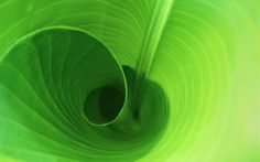 Curled Leaf HD Desktop >> HD Wallpaper, get it now!