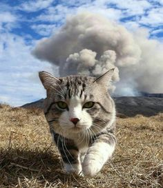 Cat running away from volcano eruption
