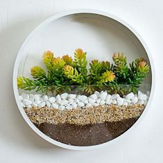 JUYOU Round Glass Wall Planter, Indoor Decorative Contemporary Morden Circle Iron Vase for Herb,Small Cactus for Room Decor, H, White: Kitchen & Dining Succulent Hanging Planter, Hanging Planters, Hanging Wall Vase, Wall Terrarium, Ikea Plants, Round Glass Vase, Metal Wall Planters, Small Cactus, Spring Home Decor