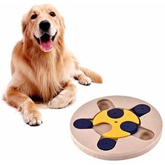 Cocainat Pet Dog Feeder Multi-functional Pet Educational Toys Puppy Puzzle Toys Dog Bowl 1 25cm >>> Read more at the image link. (This is an affiliate link) #DogToyBalls