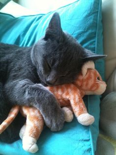 Cat sleeping with her Cuddly Toy Cat Friend Baby Animals, Funny Animals, Cute Animals, Cute Kittens, Cats And Kittens, Bengal Kittens, I Love Cats, Crazy Cats, Beautiful Cats