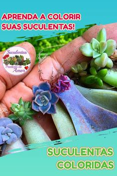 Baby Succulents, Propagating Succulents, Planting Succulents, Growing Herbs Indoors, Growing Plants, Easy Herbs To Grow, Rare Plants, Plant Care, Dream Garden