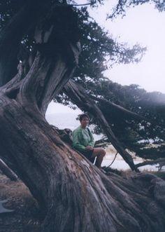 point lobos carmel san francisco 2000